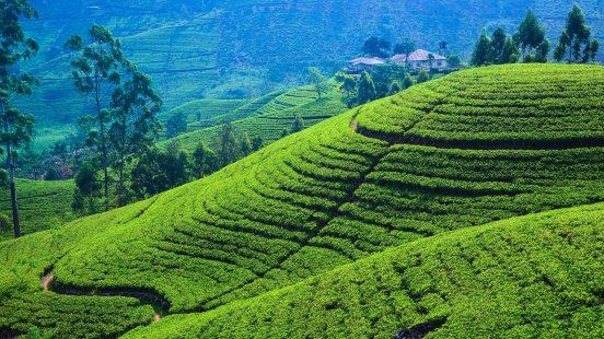 shrilanka-tea-estates